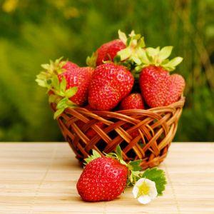 Fortlaramie strawberry seedlings for sale online