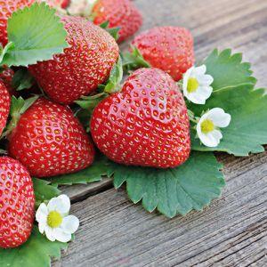 Kent Strawberries seedlings for sale online