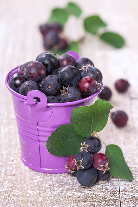 North Line Saskatoon berries seedlings for sale online