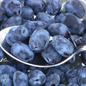 Buy Borealis berries online