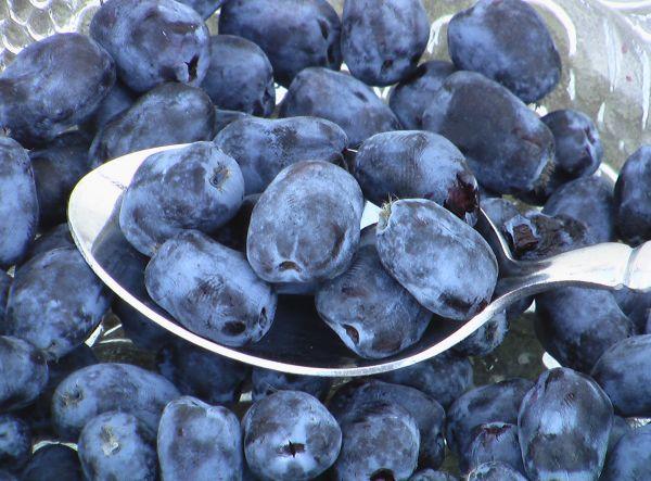 Buy Borealis berries online