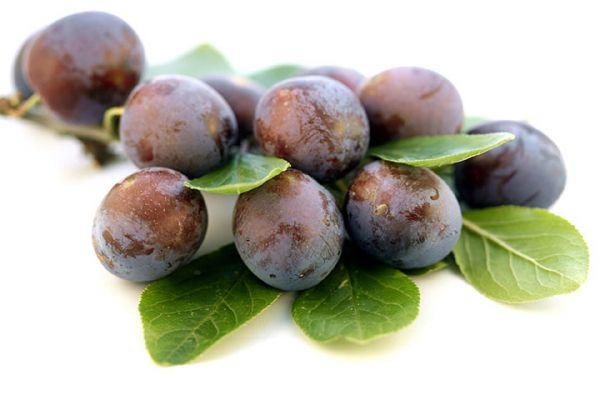 buy American plum tree Seedlings online