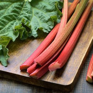Buy German wine rhubarb seedlings online