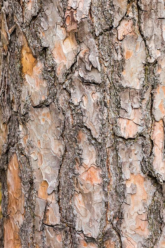 buy tree Seedlings online